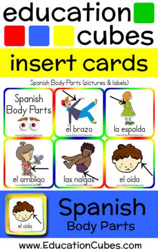 Education Cubes Spanish Body Parts insert cards