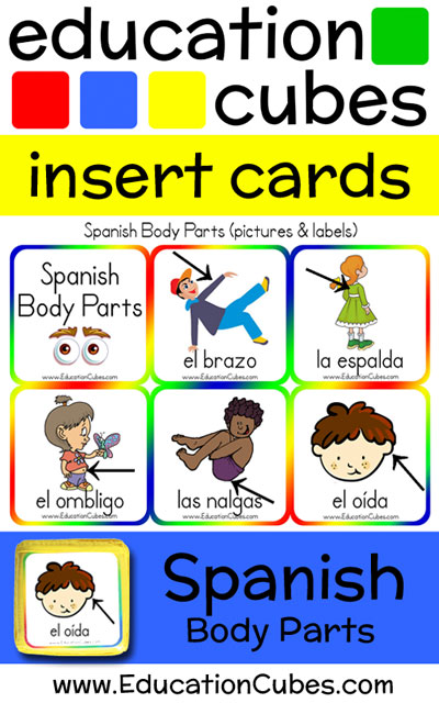 Spanish Body Parts | Education Cubes